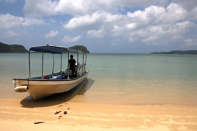西表島 幻 海 ウミガメ 観光 ジャングル 天然記念物