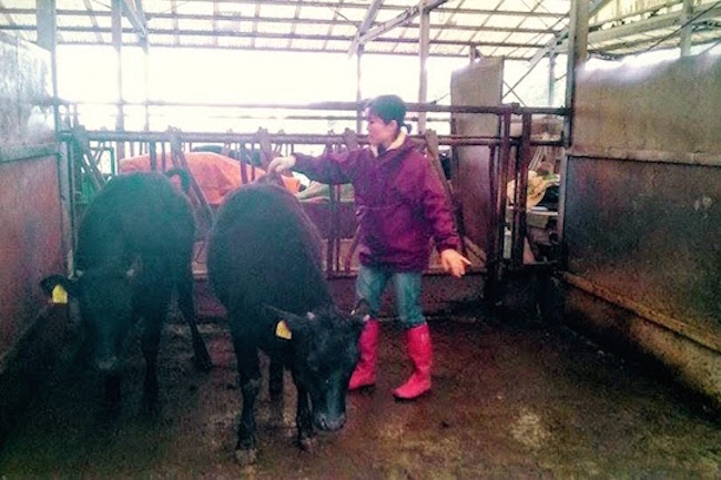 牛 の人工授精もできる、鹿児島の超本格 飼育 体験 は感染しにくさがカギ