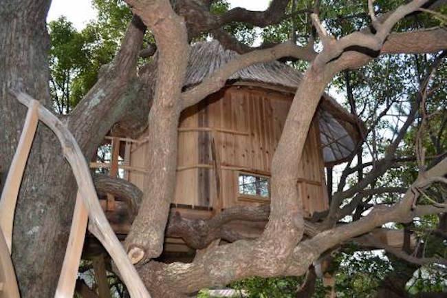 この家、樹木の上に建っています。鳥取にできた憧れのツリーハウス