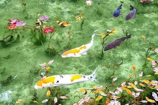 奇跡の絶景スポット。岐阜県「モネの池」の美しさに感動!