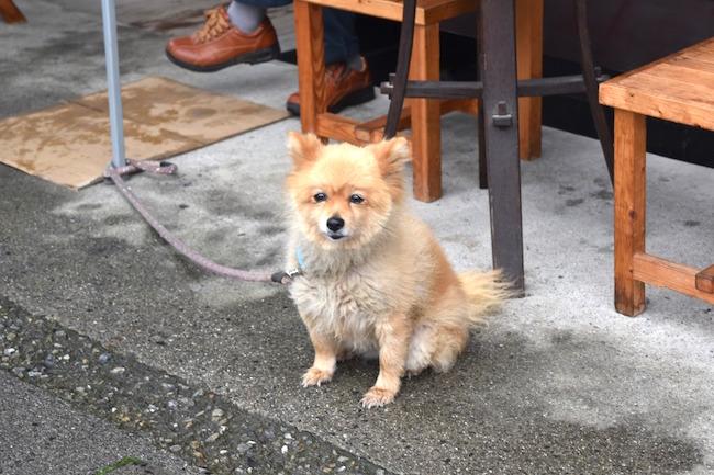 甲州街道の旧宿場町で開催される、「台ケ原宿市」はなぜ人気なのか?