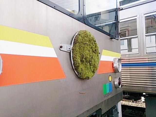 地元を走るローカル路線「水間鉄道」からはなんとヘッドマークの緑化を依頼された