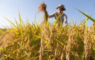 日本の農業は本当に補助金漬けなのか? デマで進められる亡国の農協改革