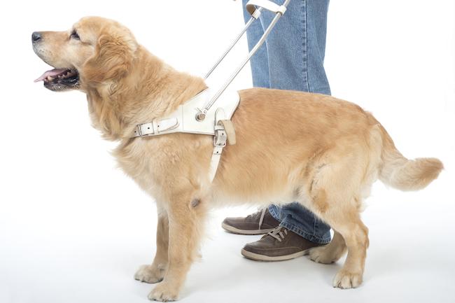 阪急百貨店の補助犬「入店拒否」問題でわかった日本人の認識不足