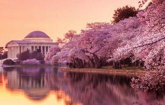 「日本、ありがとう」米国ワシントンD.C.の桜並木が、今や世界名所に