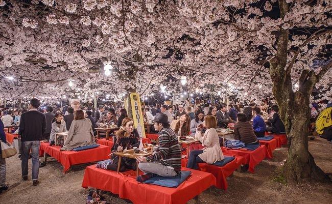 美しいだけじゃない。「桜」が日本の象徴とされている本当の理由