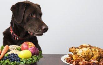 【驚愕】こんなにあった!犬に与えると危険な食べ物とは?