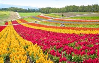 北海道が1位。世界最大の旅行ガイド本が選ぶ、アジアで行きたい場所
