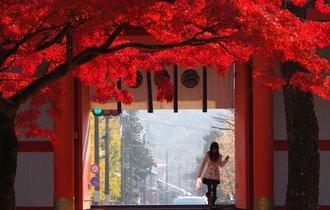 【京都】誰もがこの地に憧れた。ひとあじ違う、洛中を染める紅葉