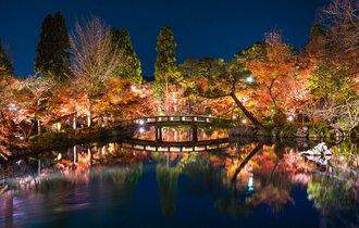 【京都案内】夜も、また良し。古都一番の紅葉を思い出に加える旅