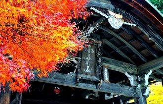【京都】美しさに言葉はいらない。嵯峨嵐山で涙する紅葉の並木道