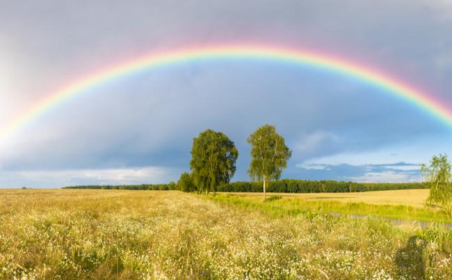 2本の木にかかる虹
