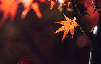 今年も古都が紅に。写真家がそっと訪れる、京都の紅葉名所の穴場