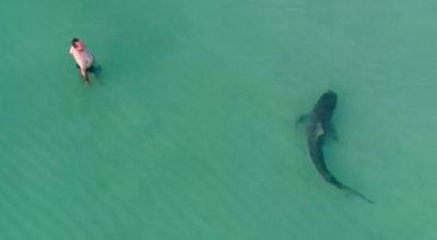 フロリダ サメ