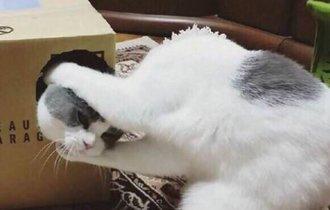 一瞬、首がもげたのかと。見れば見るほど不思議な猫画像