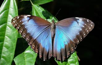 人間社会への警告か。ドイツで羽を持つ昆虫が76%も消えた事実