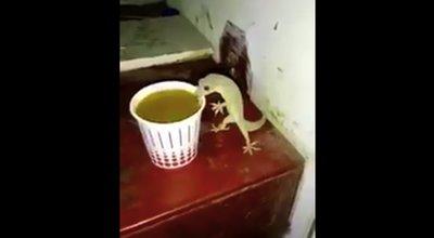 インド ヤモリ チャイ 動画 ツイッター