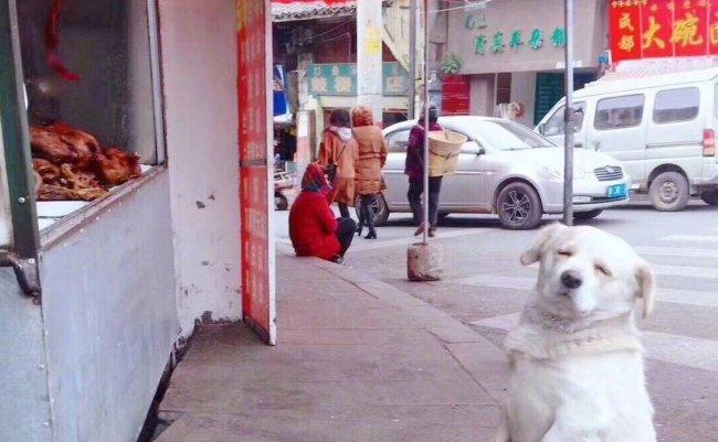 中国 ツイッター 犬 ローストチキン