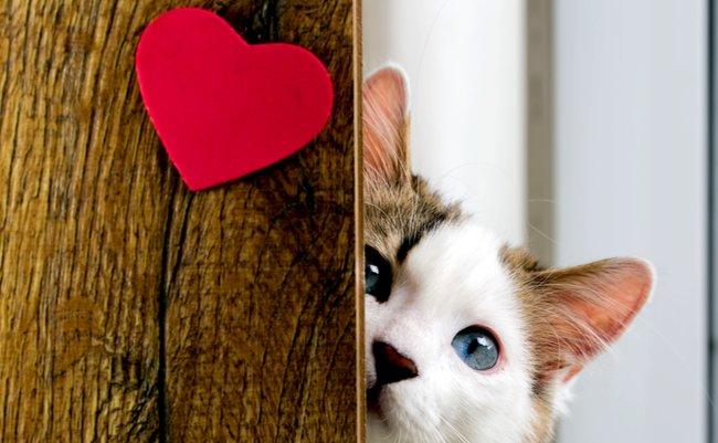 ニャンニャンニャン! 2月22日だから「猫の日」ツイートまとめ
