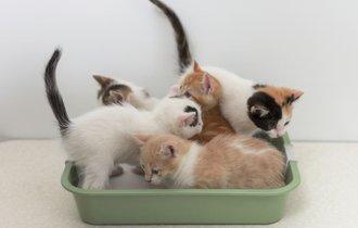 科学者はこうしてる。猫トイレの臭気をゼロにする方法がスゴい!