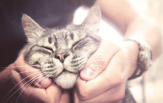 なぜ、人間はペットを飼うのか? その理由が納得すぎて笑った!
