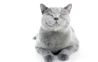 獣医師が提言、怒りをコントロールできない人は動物を師匠に持て